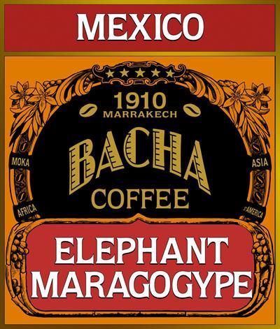 Elephant Maragogype Coffee